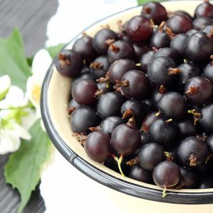 Juicy Blackcurrant Research