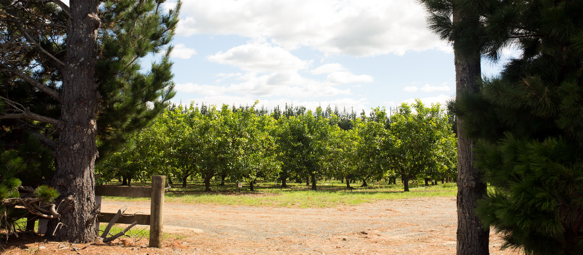 redcliffs orchard